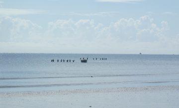 Bagamoyo, Tanzania, beach seine fishers, April 2014